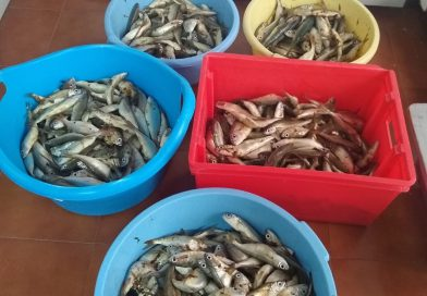 Nueva donación de pescado y alimentos de la Obra Social 'Concepción Coronada'